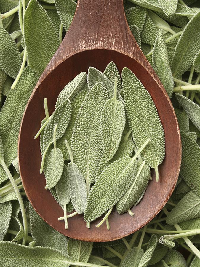 Treating Stimulant Addiction with Salvia?